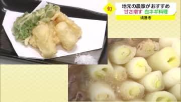 秋冬は甘さが増す 鳥取特産の白ネギ 天ぷらやネギ鍋がおススメ