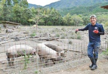 宮崎大農学部を卒業し木城町石河内で放牧養豚を起業した有方草太郎さん