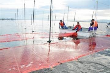 有明海でノリ網を張る漁業者=18日、熊本市沖