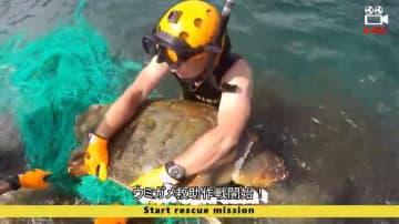 ウミガメを救出する海上保安官(海上保安庁のユーチューブから)
