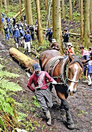 伐採された木材を運ぶ馬