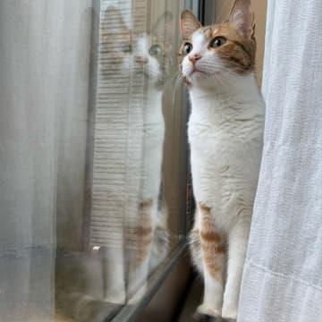 寂しすぎて…ぬいぐるみ相手にグルーミングを始めた猫のために迎えた相棒 2匹一緒ならお留守番も楽しいね
