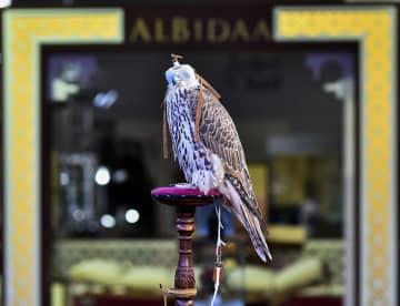 カタールで第4回国際狩猟・ハヤブサ展開催
