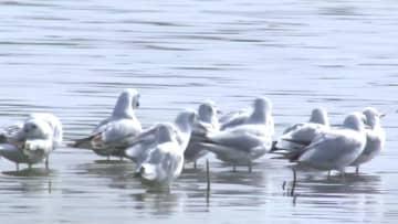 生態補水でよみがえった渡り鳥の楽園 新疆ウイグル自治区