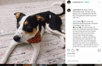 Reese Witherspoon's family have new dog