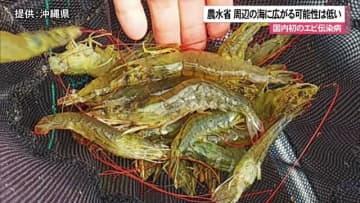 国内初のエビの伝染病 養殖場周辺の海域に広がる恐れは低い農水省が見解
