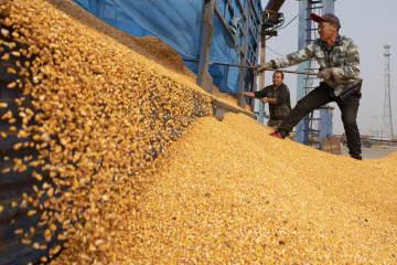 寧安市で穀物加工が最盛期 黒竜江省
