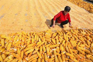 今年の食糧生産、豊作確実に 農業農村部部長