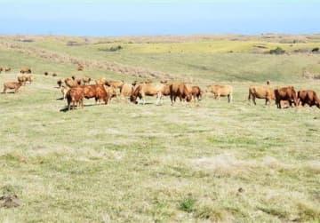 国の重要文化的景観への追加指定が有力となった北外輪山の牧野=14日、阿蘇市