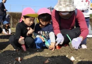 益城町の住民と一緒にチューリップを植え付ける園児ら=21日、人吉市