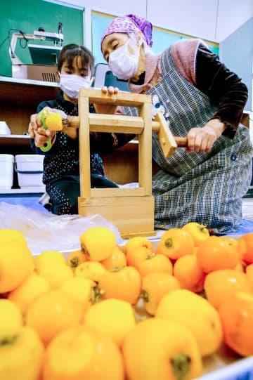 妙丹柿の皮をむく児童