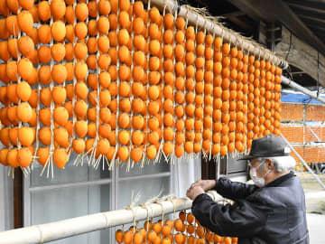 軒下で天日干しされる連柿=22日午前10時41分、山県市掛、石丸国男さん方