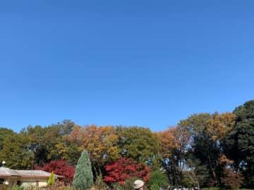 ライトアップも楽しめる♪ 昭和記念公園で紅葉狩り