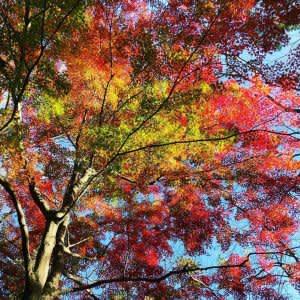 湖に映り込む景色にうっとり☆ 三重県名張の青蓮寺湖で紅葉狩り
