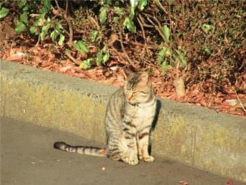 野良ネコ、のどを切られて惨殺=当局「違法ではない」―中国