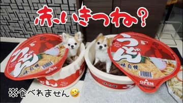 ワンちゃんがあの赤いうどんに⁉ かわいすぎる「カップ麺ペットハウス」【動画】