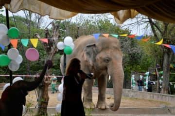 'Do you believe': Cher sends Pakistan elephant to Cambodia