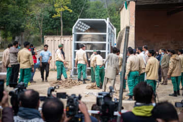 Lonely elephant Kaavan leaves Pakistan for new life in Cambodia