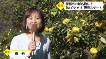 西都市特産のゆずを活用!「ゆずシャリ」のお寿司販売開始 宮崎県