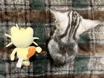 ずっと一緒にいてね、ニャース。猫がぬいぐるみを抱く写真に「永久保存版」の声