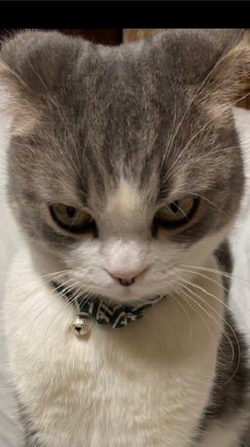 「倍返しだ!」って聞こえてきそう…「半沢直樹」バリの形相で怒る猫ちゃんが話題
