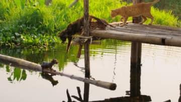 湖に落ちた子ネコを心配する母ネコ 『岩合光昭の世界ネコ歩き』初めての試練映像解禁