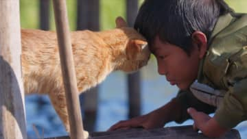 魚をとろうと奮闘する親子ネコ 心温まるスキンシップも 『岩合光昭の世界ネコ歩き』本編映像解禁