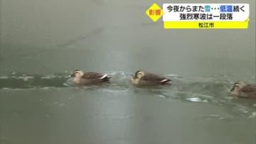 強烈寒波おさまり晴れ間も お堀の氷も解け始めカモもすいすい(島根・松江市)