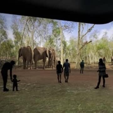 Panasonic team with Illuminarium for virtual safaris