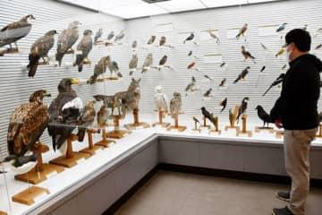 さまざまな鳥の標本を観賞できる展示会場=我孫子市