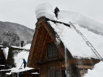 合掌造り家屋の雪下ろしをする茅葺き職人=白川村荻町