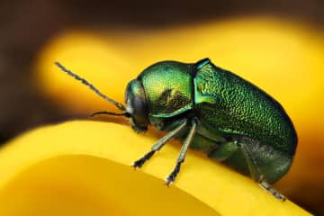 Death by 1,000 cuts: Are major insect losses imperiling life on Earth?