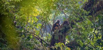 絶滅危惧種ファイヤールトンの赤ちゃん撮影 雲南省