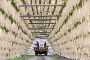 約2万本の大根が掛けられた「大根やぐら」=昨年12月、宮崎市田野町