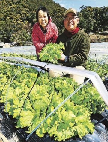脱サラして「すさみ産のレタス」を生産、PRする矢形孝志さん(右)。母親の久代さんは農業の〝師匠〟という=和歌山県すさみ町太間川で