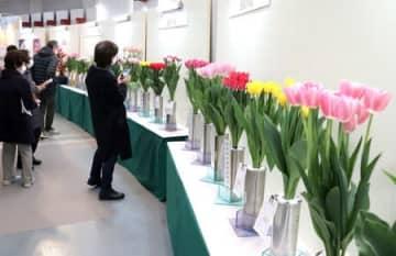 チューリップなどの県産花卉を集めた「フラワーウェーブ新潟2021」=20日、新潟市西区