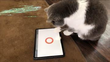 """正解率は85%? 猫でも解けるクイズを出題…""""猫参加型""""の交通安全運動を開催中 画像"""