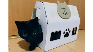 箱と一体化…まん丸おめめの黒猫が可愛い! すんなり入ったのか飼い主に聞いてみた 画像