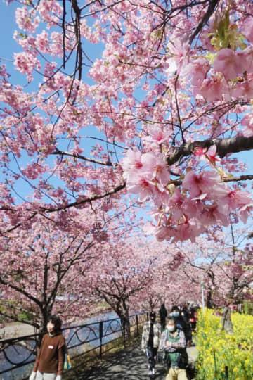 3~5月、全国的に暖かい春に 気象庁が3カ月予報 画像