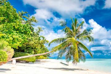 ルフトハンザグループ、夏のレジャー需要急増を予想 カリブ海やギリシャ路線強化 画像