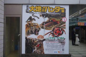 上野・科博で捕食者に関する特別展「大地のハンター展」が3月9日より開催