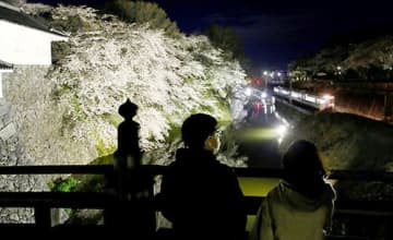 山形地方気象台の満開発表に合わせるように桜のライトアップが始まった霞城公園東堀=山形市