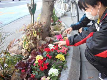 目抜き通りの花壇。花と一緒にサニーレタスが植えられた=岐阜市内