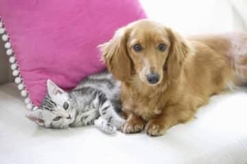 「猫好き」か「犬好き」かで、実はその人の性格や恋愛傾向などの特徴、相性がわかるのです。あなたの彼氏は猫好き男子?それとも犬好き男子?あなたの彼女は猫好き女子?犬好き女子?