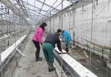 移住を見据え、栽培体験 若い世代が研修 長生農業独立支援センター