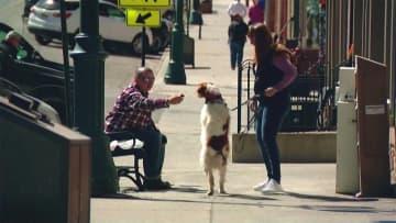 二人三脚できょうもお散歩 事故で前足けがも... 歩くことを諦めない姿に「励まされた」 画像