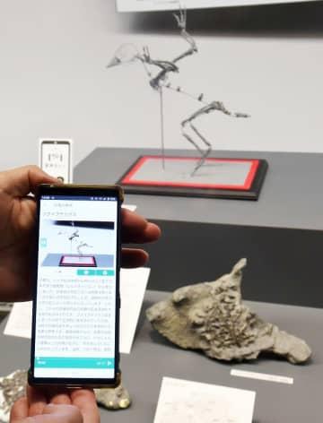 文字や音声で展示内容を紹介するスマホのアプリ=4月21日、福井県勝山市の福井県立恐竜博物館