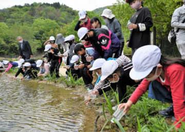 復旧した古鷹山ビオトープで、池にメダカを放流する切串小児童たち