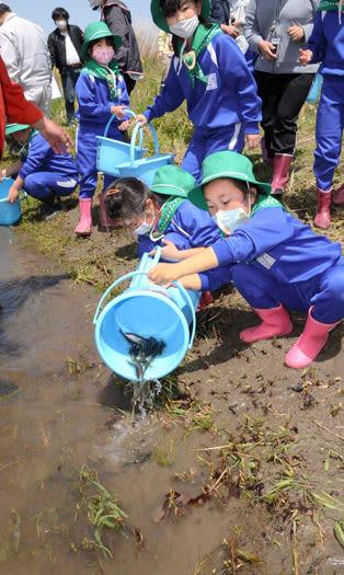 久慈川に稚アユを放流する児童