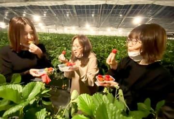 摘み取ったイチゴを味わう人たち=福井県坂井市春江町石塚